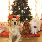 The holiday season is a great time to be with family, 2- and 4-legged.