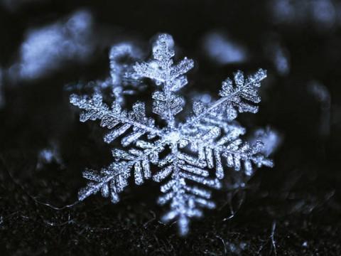 Snowflakes?